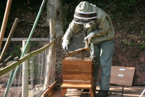 Installing Package of Bees