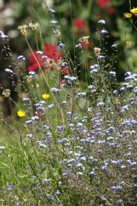 Wild Flowers For Bees